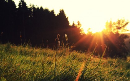 Morning-Shine-Wallpaper